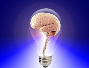 6 מזונות שישמרו על המוח שלכם צעיר